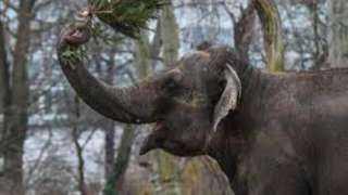 إخضاع 28 فيلا لفحص كورونا في الهند